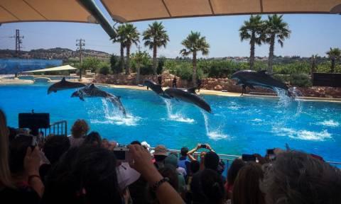 Συγκλονιστικές στιγμές με τα… παιχνίδια των δελφινιών: Όταν η φύση κάνει θαύματα