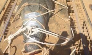 Αυστραλία: Θαλάσσιος κροκόδειλος 600 κιλών πιάστηκε έπειτα από οκτώ χρόνια! (pic)