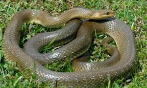 Αχαΐα: Φίδι δάγκωσε 6χρονο παιδί