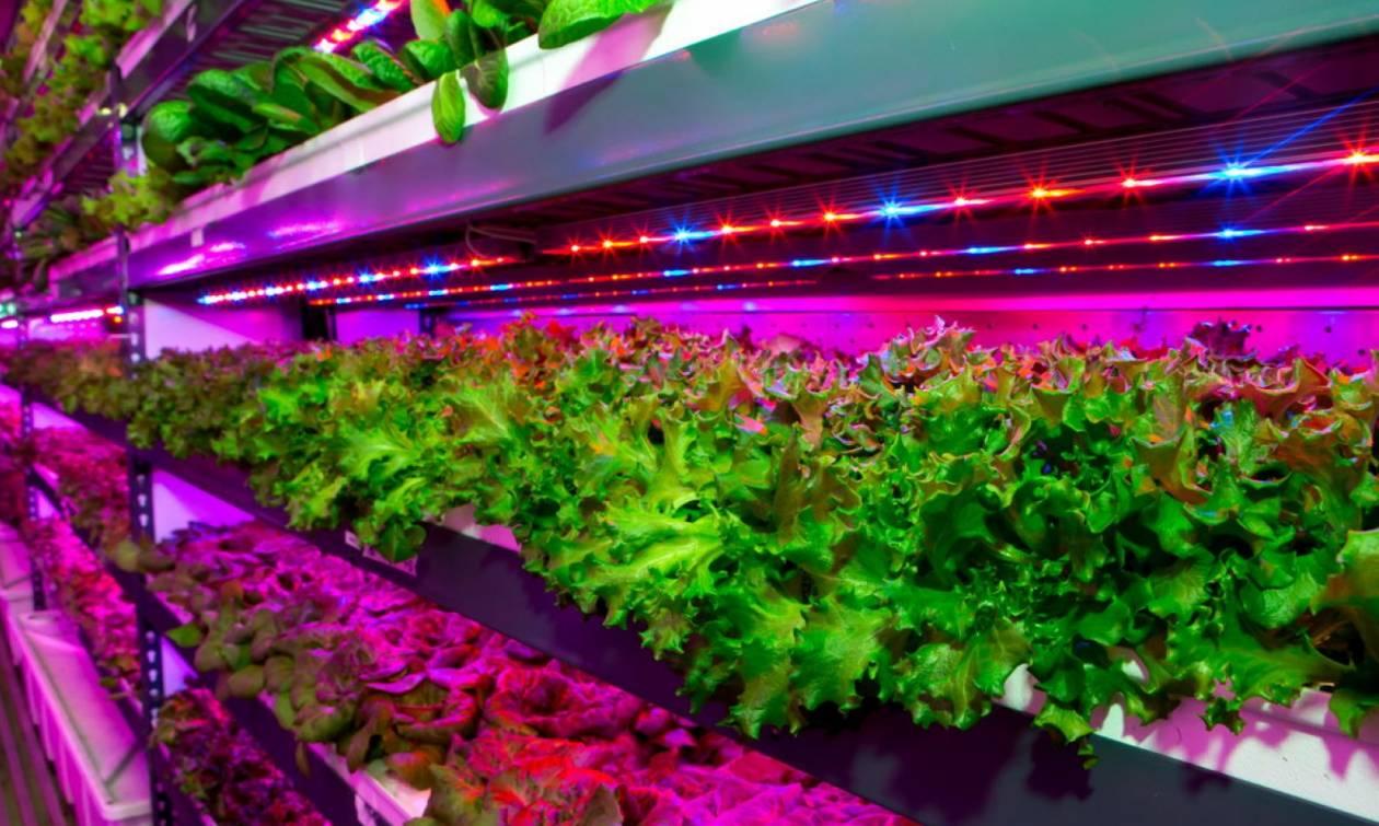 Αυτός είναι ο μεγαλύτερος λαχανόκηπος στον κόσμο! Δείτε πού είναι (pic)