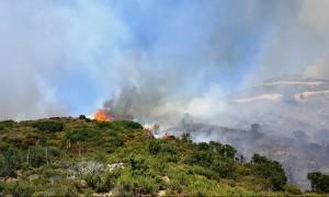 Φωτιά ΤΩΡΑ: Μεγάλη πυρκαγιά στη Λεωφόρο Μαραθώνος