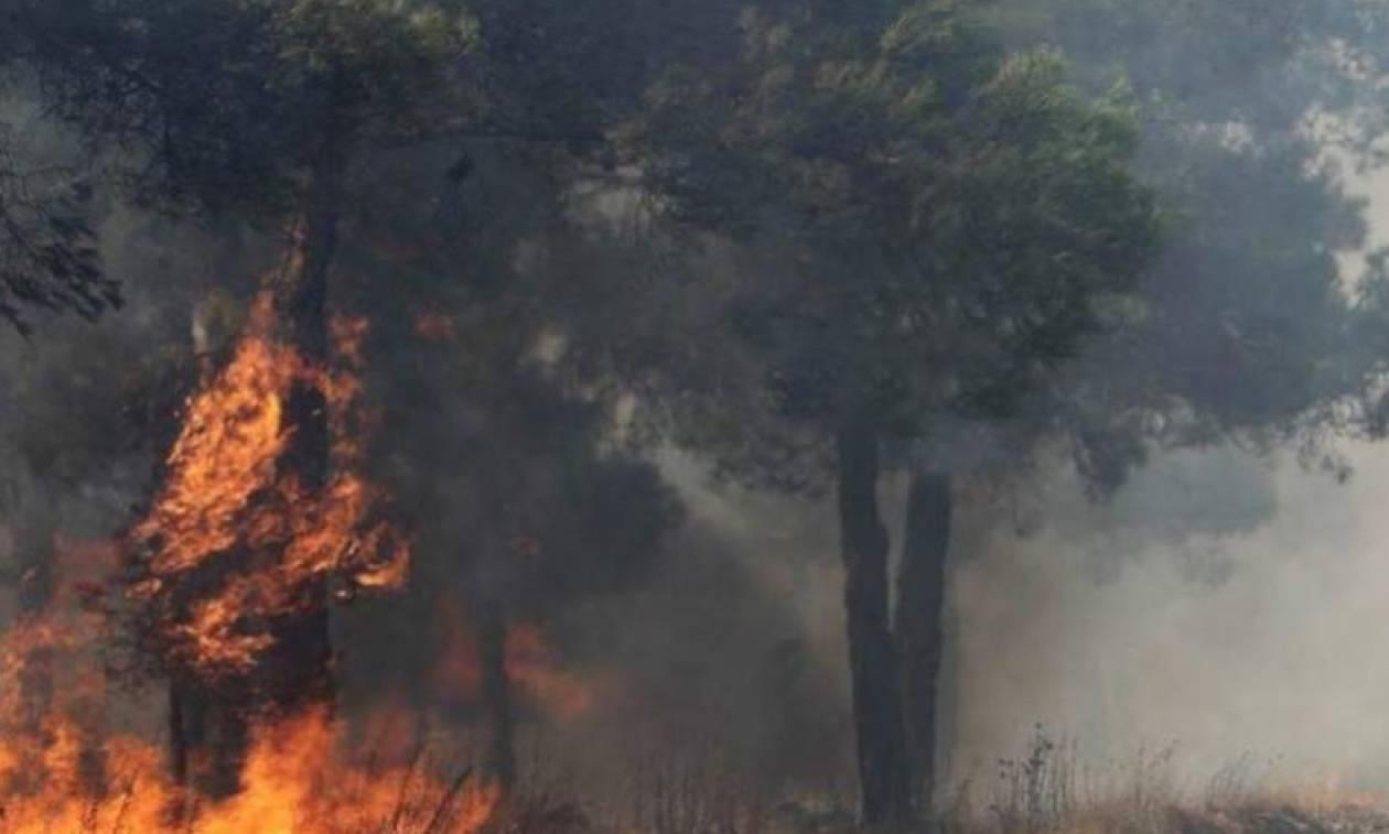 Φωτιά ΤΩΡΑ: Μεγάλη πυρκαγιά στον Πύργο