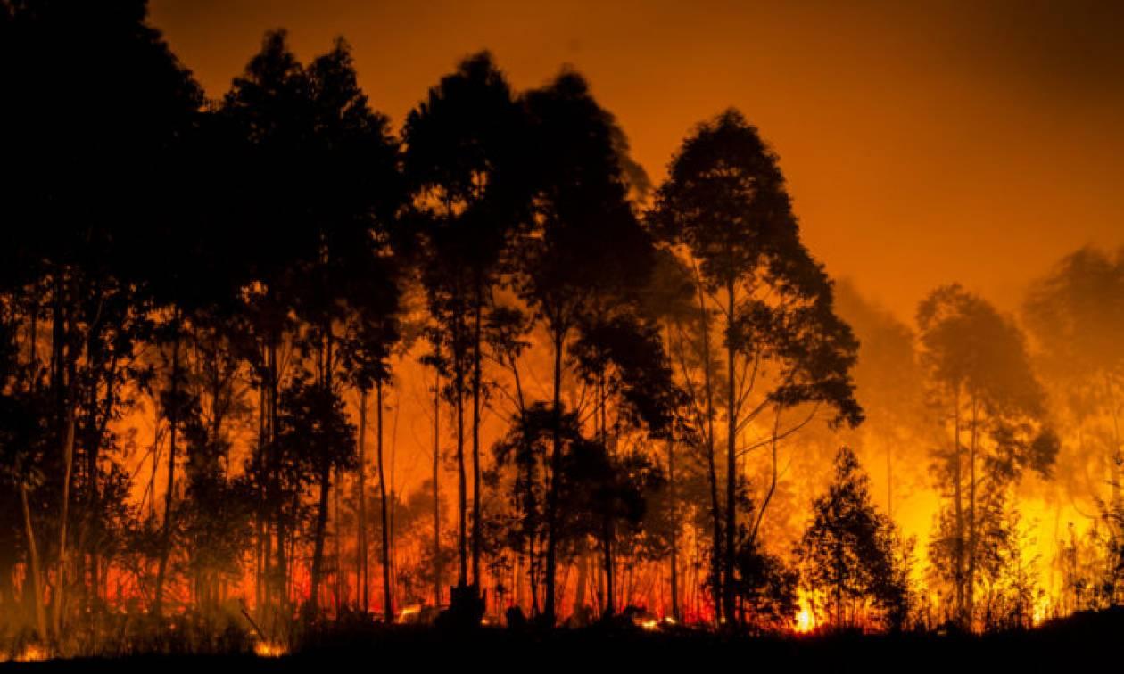 Στο έλεος των πυρκαγιών η Σουηδία: Καίγονται αρχαία δάση - Δείτε φωτογραφίες και βίντεο