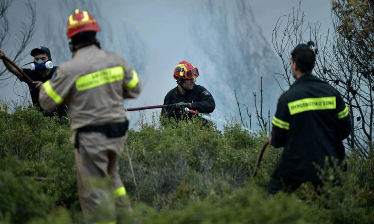 Υπό έλεγχο η φωτιά στην Ηλεία