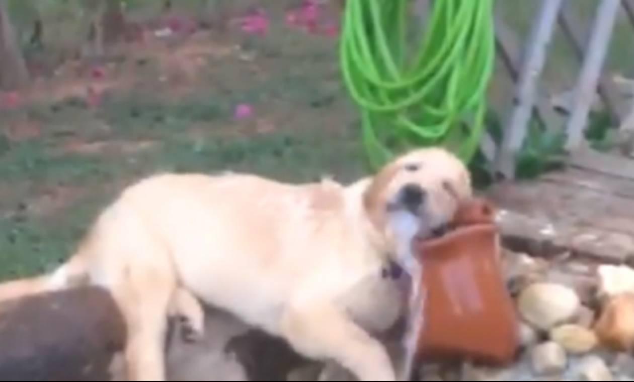 Δεν φαντάζεστε τι έκανε αυτός ο σκύλαρος για να γλιτώσει από τον καύσωνα!