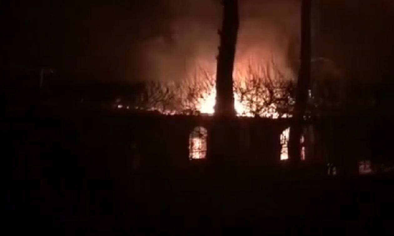 Φωτιά Ραφήνα: Στις φλόγες τυλίχθηκαν σπίτια και περιουσίες (vids)