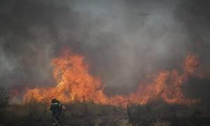 Φωτιά ΤΩΡΑ: Μεγάλη πυρκαγιά στην Αταλάντη - Στις φλόγες ο Χλωμός (χάρτης)