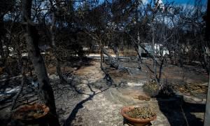 Φωτιά Αττική: Κατέληξε 84χρονος εγκαυματίας στο Θριάσιο - Στους 80 οι νεκροί