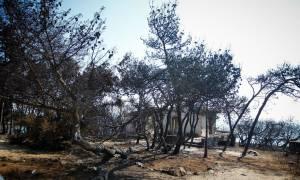 Φωτιά Αττική: Η πύρινη κόλαση σε μια φωτογραφία