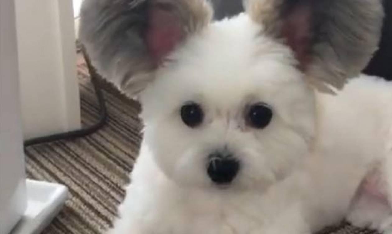 Είναι σκυλί; Είναι κοάλα; Είναι κάτι άλλο ή μήπως είναι ο Μίκυ Μάους;