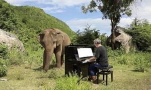 Άντρας παίζει πιάνο σε τυφλό ελέφαντα και το ζώο «χορεύει» στο ρυθμό της μουσικής (pics+vid)