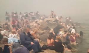 Εικόνες γροθιά στο στομάχι: «Στοιβαγμένοι» στα βράχια προσπαθούν να γλιτώσουν από τη φωτιά (vid)