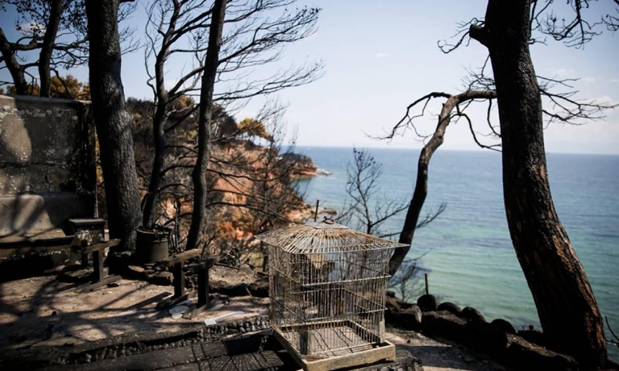 Φωτιά: Σοκάρει ο εμπρηστής στον Μαραθώνα: «Αυτός είναι ο λόγος που έβαζα φωτιές»