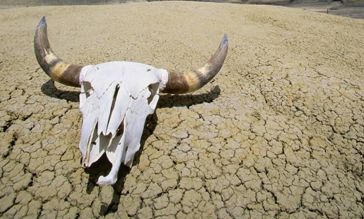 Παγκόσμιο ρεκόρ ζέστης: Δείτε πού έφτασε ο υδράργυρος στην Κοιλάδα του Θανάτου
