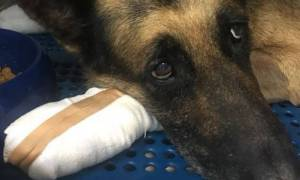 Φωτιά Μάτι: Ιδιοκτήτης σκύλου δεν τον θέλει πίσω γιατί κάηκαν οι πατούσες του