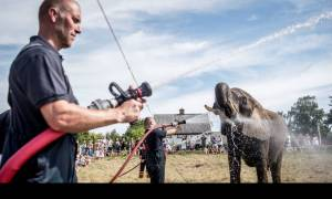 Καύσωνας στη Δανία: Μέχρι και οι ελέφαντες υποφέρουν από τη ζέστη