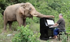 Άπειρα respect στον πιανίστα που παίζει μουσική σε τυφλούς ελέφαντες