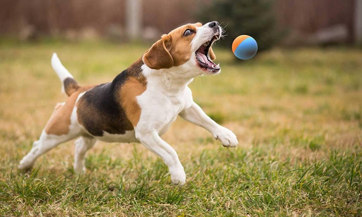 Σκυλάκι θέλει να παίξει το «πέτα το μπαλάκι» με ένα… άγαλμα (vid)