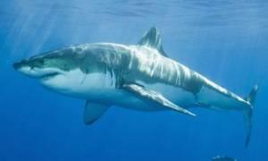 Τρόμος στην Αίγυπτο: Καρχαρίας κατασπάραξε τουρίστα!