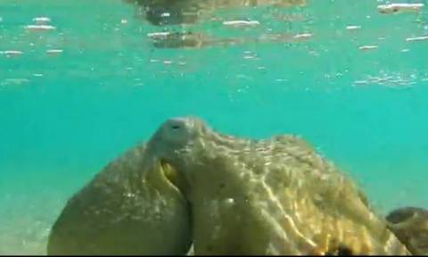 Επαθαν... σοκ όταν βρήκαν στην παραλία ένα τεράστιο χταπόδι... (video)