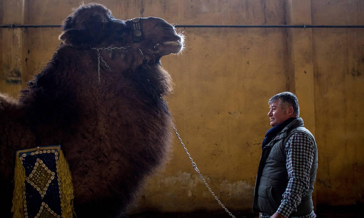 Τουρκία: Αγρότης πουλά την καμήλα του για να μην υπηρετήσει στο στρατό του Ερντογάν