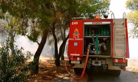 В Греции в районе Неа Макри бушует пожар