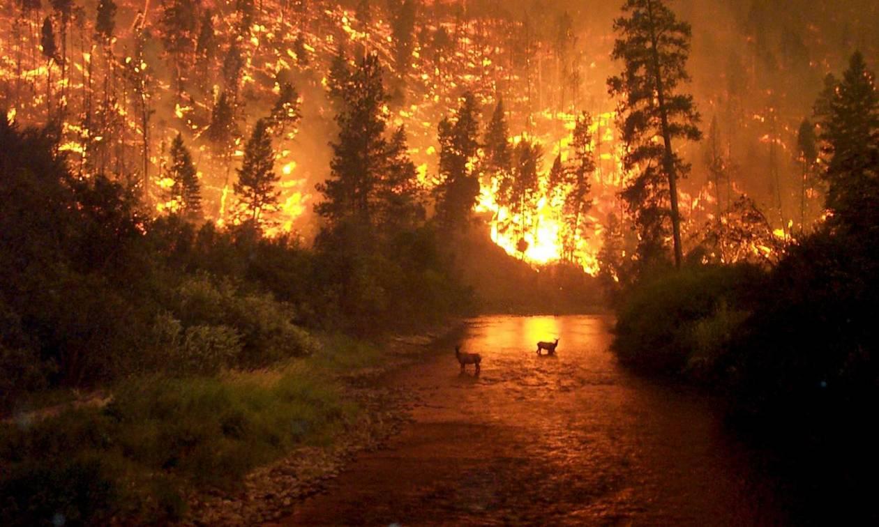 «Βιβλική» καταστροφή προβλέπουν οι ειδικοί: Έρχονται ισχυρότερες και φονικότερες πυρκαγιές