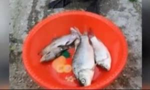 Όταν πεινάς σαν λύκος και σου φέρνουν επιτέλους φαγητό (vid)