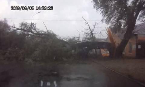 Βίντεο ΣΟΚ: Δέντρο πέφτει με δύναμη στη μέση του δρόμου (vid)