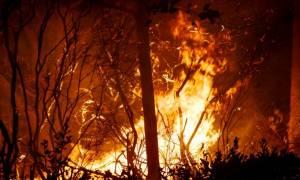 Αχαΐα: Υπό μερικό έλεγχο η φωτιά στην Άρλα