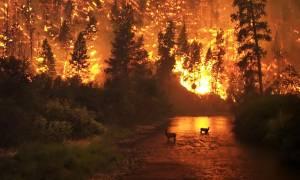Στις φλόγες οι ΗΠΑ: Μαίνονται πάνω από 100 πυρκαγιές
