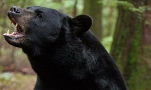 Μαύρη αρκούδα προσπαθεί να «πιάσει» φίλο έναν άνδρα που ατάραχος κάθεται στη βεράντα του (vid)
