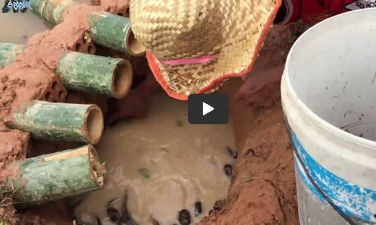 Καλοκαίρι - ψάρεμα: Δείτε πώς μπορείτε να πιάσετε ψάρια και καβούρια με 5 μπαμπού