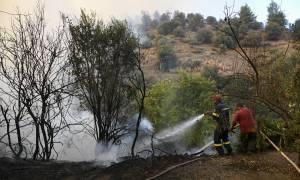 Φωτιά Εύβοια: Χωρίς ενιαίο μέτωπο η πυρκαγιά - Διάσπαρτες οι ενεργές εστίες (pics+vids)