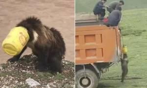 Χωρικοί έσωσαν αρκούδα που της σφίνωσε κάδος στο κεφάλι - Η απίστευτη αντίδρασή της (vid)