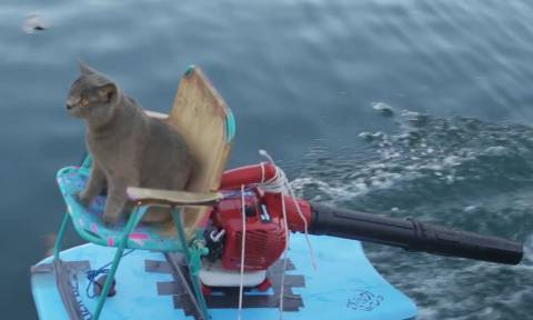 Η γάτα του αγαπάει το νερό και εκείνος της έφτιαξε ένα διαφορετικό τζετ σκι (vid)