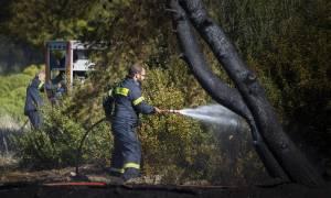 Τρεις συλλήψεις για εμπρησμούς σε Αττική και Έβρο - Έβαζαν φωτιές για απίστευτους λόγους