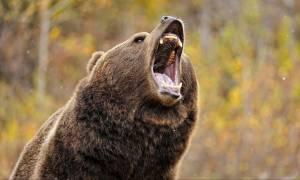 Πάλεψε με αρκούδα, έπεσαν μαζί σε γκρεμό, τον δάγκωσε, την πυροβόλησε κι όλα αυτά ήταν μόνο η αρχή