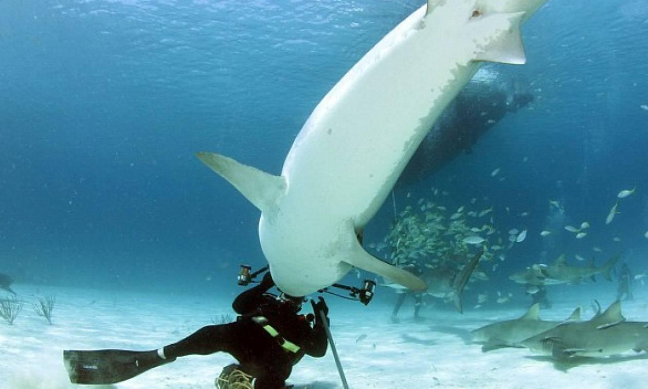 Δύτης χορεύει με καρχαρία (vid)