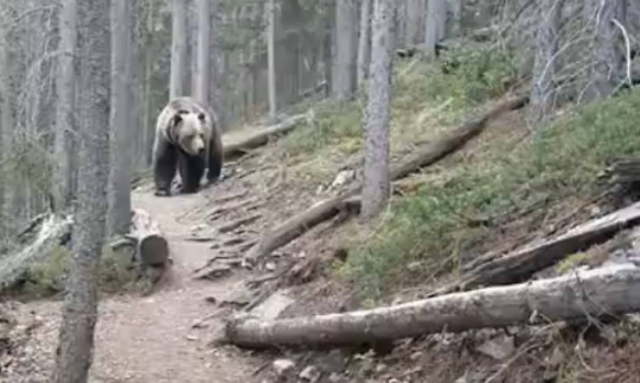 Δείτε την αντίδραση πεζοπόρων στον Καναδά  όταν συναντησαν αρκούδα στο δάσος (vid)