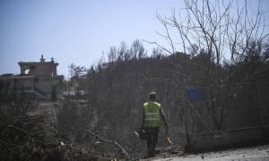 Ένας μήνας μετά από τη φονική πυρκαγιά: Τα βήματα στήριξης για την αποκατάσταση