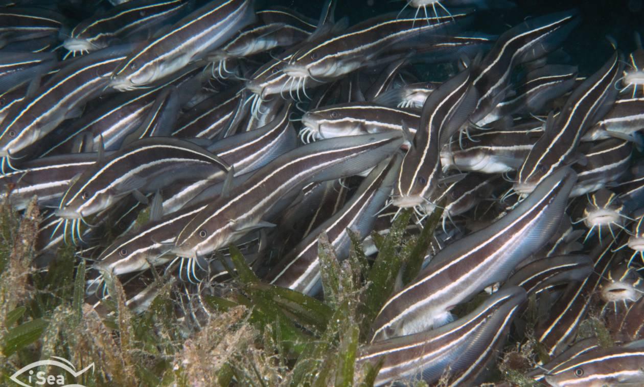 Κίνδυνος - θάνατος! Αυτά είναι τα δηλητηριώδη ψάρια των ελληνικών θαλασσών