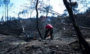 Μάτι: Έρχονται διώξεις για τη φωτιά – Από Σεπτέμβριο η κλήτευση των υπόπτων