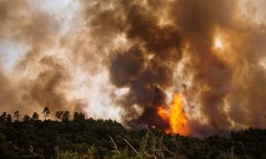 Συνελήφθη ο κατά συρροή εμπρηστής της Εύβοιας - Είχε βάλει 9 φωτιές