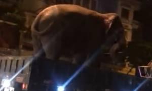 Απίστευτο: Δείτε πώς έβαλαν τον ελέφαντα σε καρότσα φορτηγού (vid)