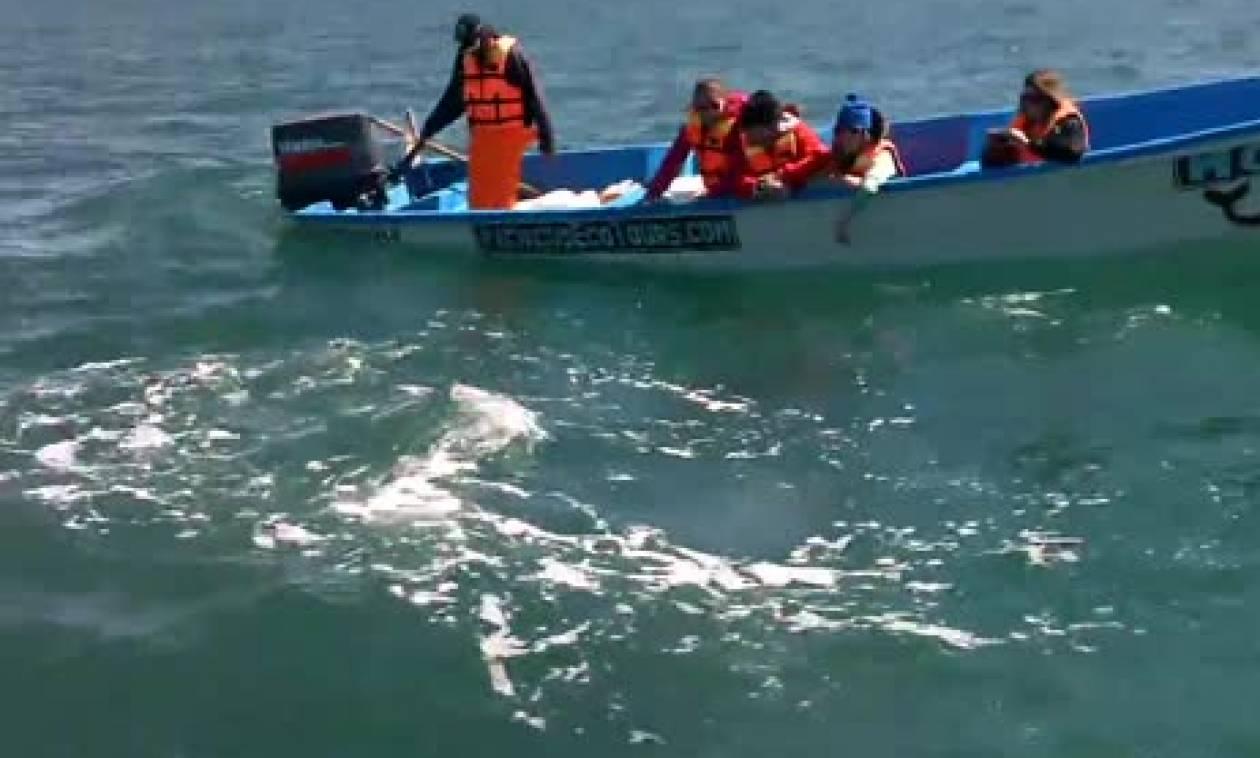 Ηθελαν να δουν φάλαινες από κοντά! Δεν περίμενε κανείς αυτό που ακολούθησε... (video)