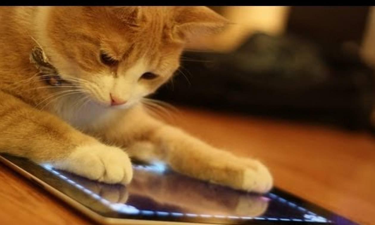 Αστείο βίντεο: Δείτε γάτες να παίζουν παιχνίδι σε ... tablet