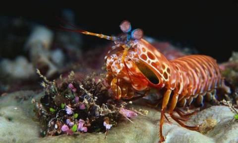 Αυτά είναι τα δέκα ζώα που μοιάζει να έχουν… υπερδυνάμεις!