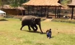 Θα «λιώσετε»: Ελέφαντας τρέχει να σώσει το αφεντικό του (vid)