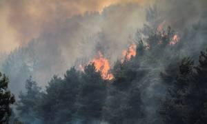 Μεγάλη φωτιά στην Ηλεία (pics+vid)